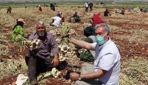 Tarım işçileri, bayramda da mesailerine ara vermedi