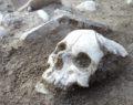 Arkeolojik kazı heyecan yarattı