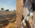 İşçiler yol kenarında bomba düzeneği buldu