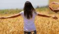 Buğdayda hasat başlıyor