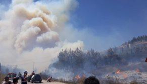 Orman yangını kontrol altında