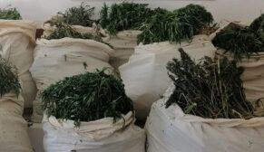 975 bin Hint keneviri, 176 kilo kubar esrar ele geçirildi