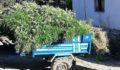 10 kilo kubar esrar ile bin 658 kök kenevir ele geçirildi