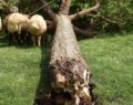 Şanlıurfa'da fırtına ağaçları kökünden söktü