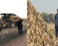 Model alanlarda verimli hasatlar