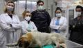 Kaza geçiren sahipsiz köpek tedavi edildi