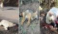 Köpek katliamı: Zehirlenerek telef oldu