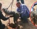 Şanlıurfa'da uyuz köpeğe motor yağı ile tedavi