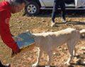 Başına teneke sıkışan köpek kurtarıldı