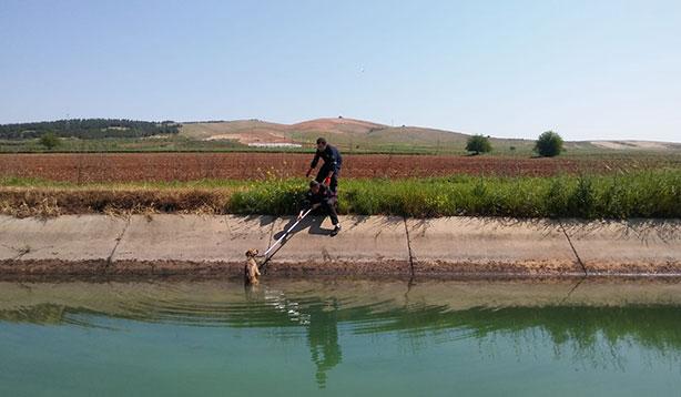 Şanlıurfa'da kanala düşen köpeği itfaiye kurtardı