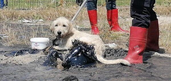 Döktükleri ziftle köpek katili oldular