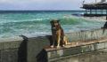 9 yıldır aynı limanda bekliyor