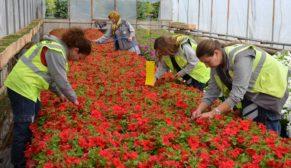 Eskişehir Kadınların eliyle çiçek açıyor