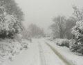Kar zeytin ağaçlarına yaradı