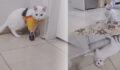 Yaptığı protezle engelli kedi yeniden koşmaya başladı