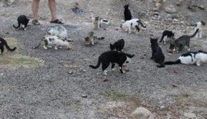 Maaşının üçte biri ile sokak kedilerini besliyor