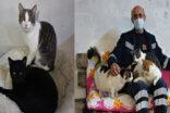 Sokak kedileri için 3+1 ev yaptı