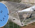 Şanlıurfa'da koruma altındaki 278 kelaynak doğaya salındı