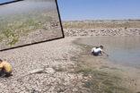 Suyu çekilen gölette binlerce balık telef oldu