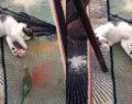 Kedi ile muhabbet kuşunun dostluğu
