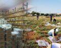 Urfa'da Türkiye'nin en zengin nohut gen bankası oluşturuldu