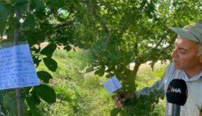 Ağacın dalındaki not hayrete düşürdü