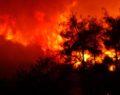 Çıkan orman yangını 4 saatte kontrol altına alındı