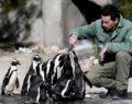 Penguenler yumurtlamaya başladı