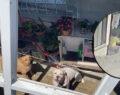 Pitbull dehşeti: Genç kız ağır yaralandı
