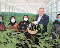 Büyükşehir'de seracılık projesinde ilk hasat yapıldı