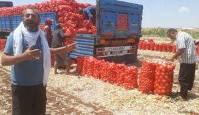 Urfa'da soğan bu yıl çiftçiyi üzdü