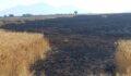 Çıkan yangında buğday tarlası kül oldu