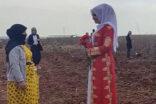 Şanlıurfa'da tarlada çalışan kadınlara sürpriz