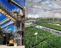 Büyükşehirden hem elektrik hem çiçek üreten tesis
