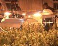 Milyon Liralık uyuşturucu serası bulundu