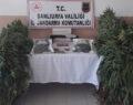 Urfa'da uyuşturucu operasyonunda 2 tutuklama