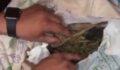 Uyuşturucu taciri suç üstü yakalandı