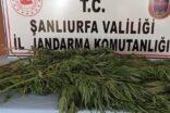 Şanlıurfa'da uyuşturucu operasyonu