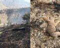 Yangında yüzlerce dönüm alan kül olurken, birçok yaban hayvanı da telef oldu