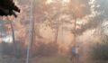Ormanlık alan alevlere teslim oldu