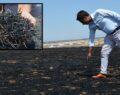 Urfa'da anız yangınları doğayı olumsuz etkiliyor