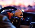 Şehirlerarası araç ile seyahat yasak