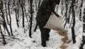 Hayvanlar için doğaya kilolarca yem bırakıldı