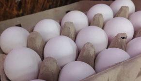 Yumurta fiyatları rekor seviyeye ulaştı
